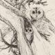 Owls Dwelling