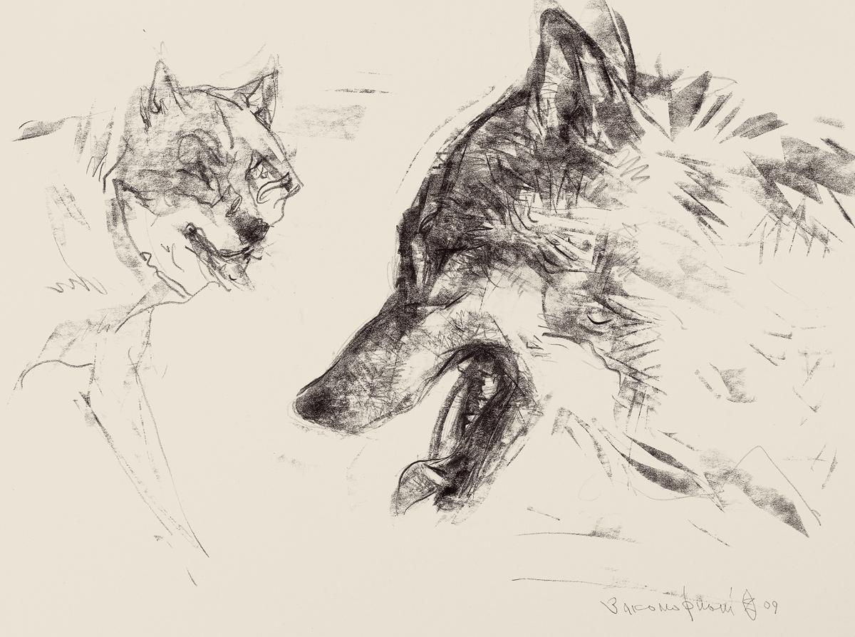 Deux têtes de loups