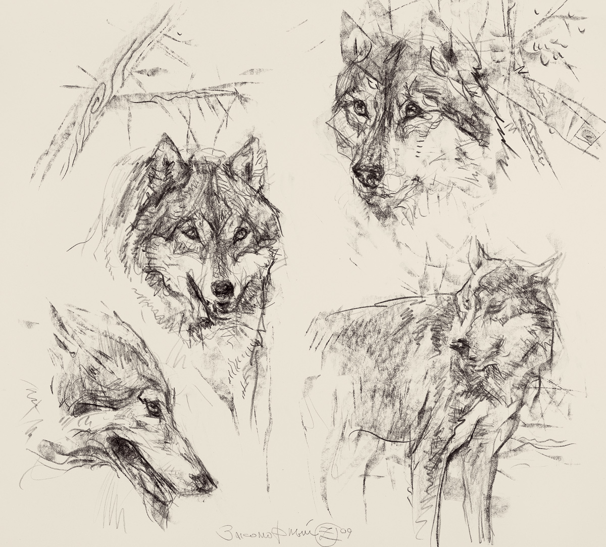 Studies of Wolf Heads
