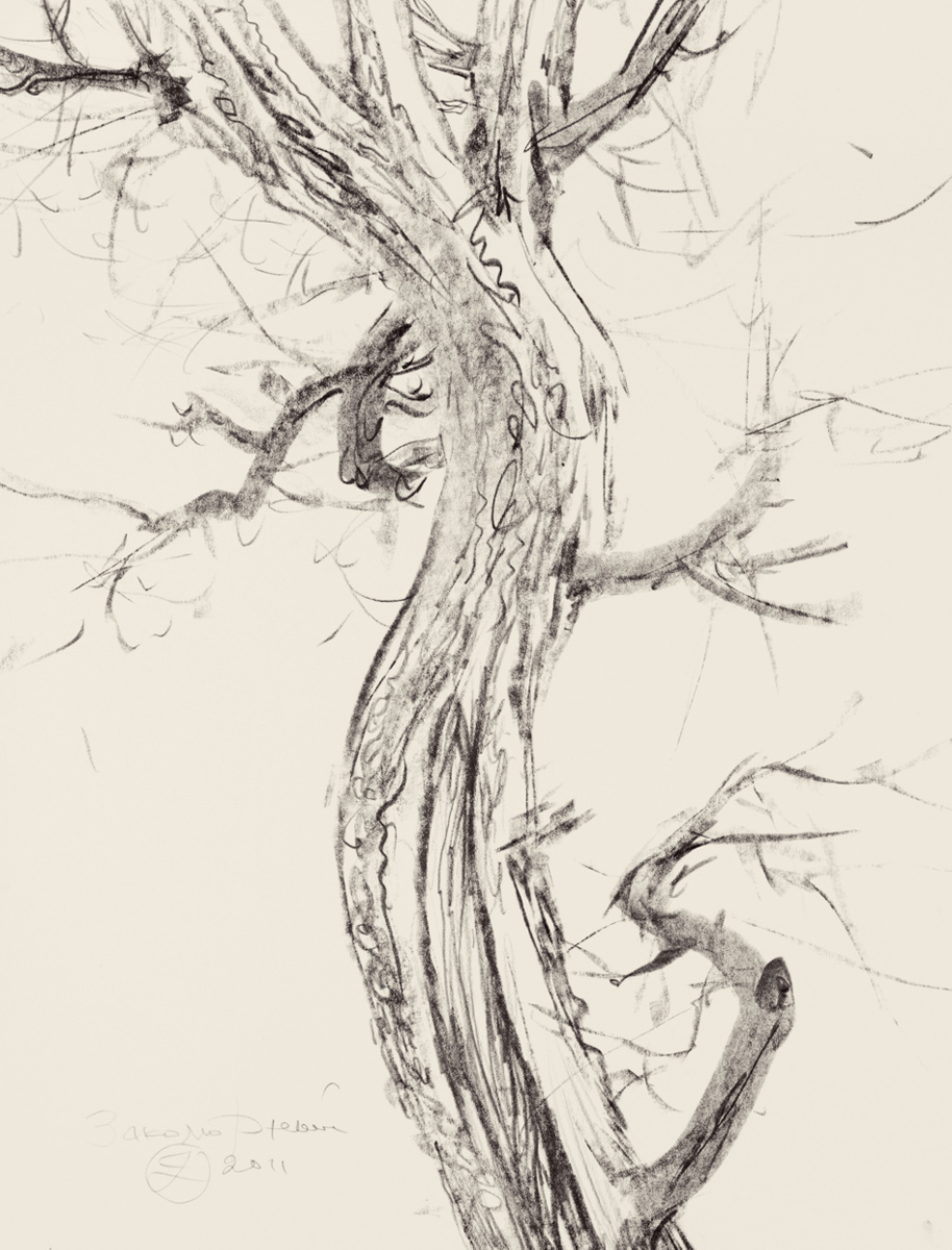 Study of a Dried Tree