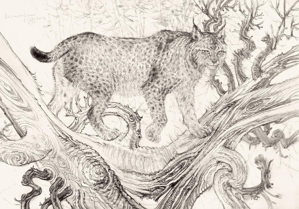 Le lynx aux griffes