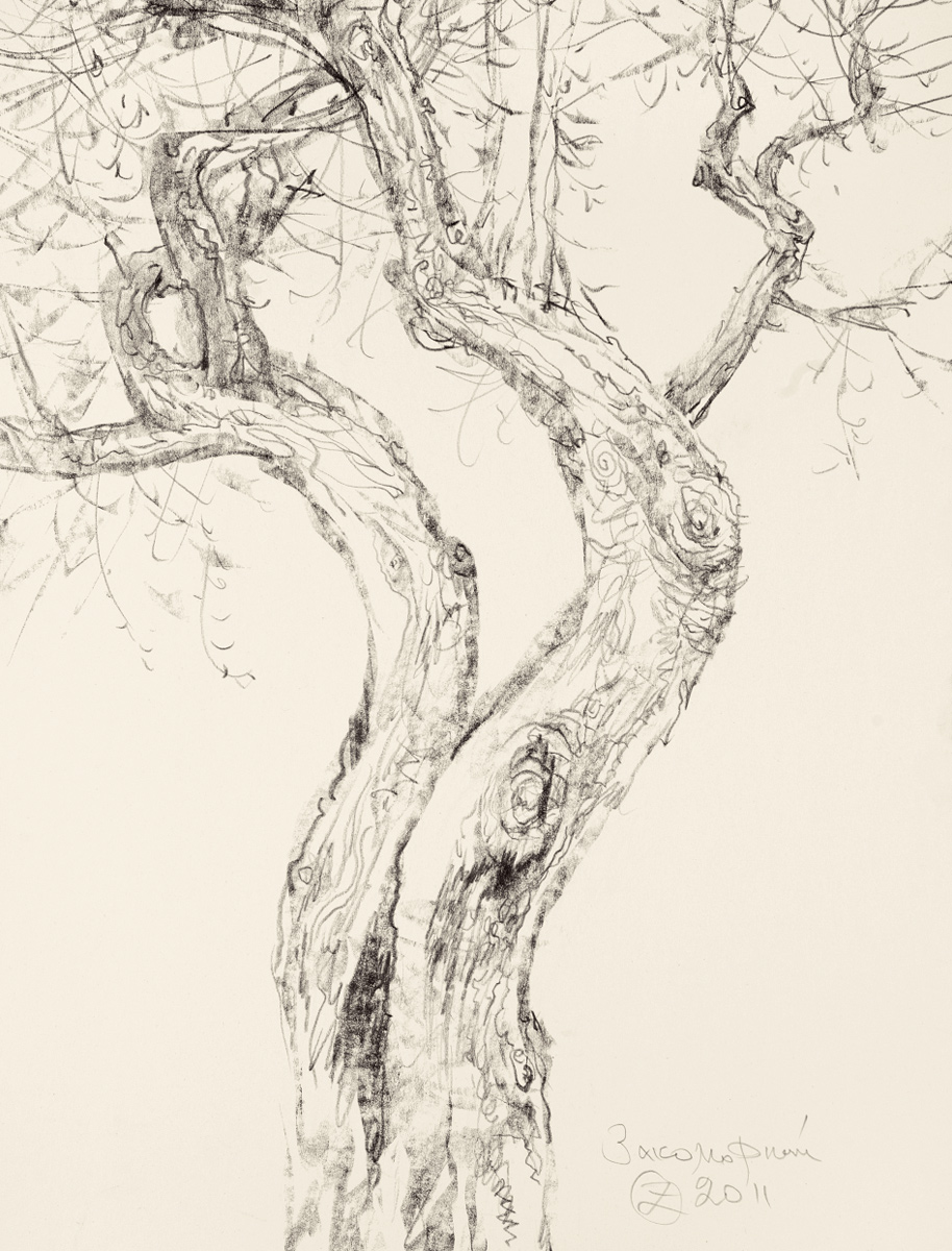 Study of a Fruit Tree