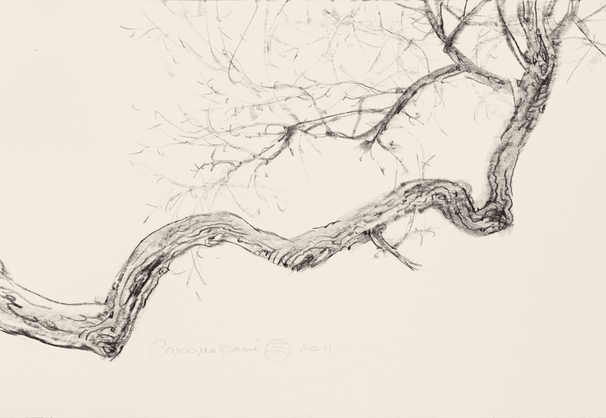 Study of a Branch