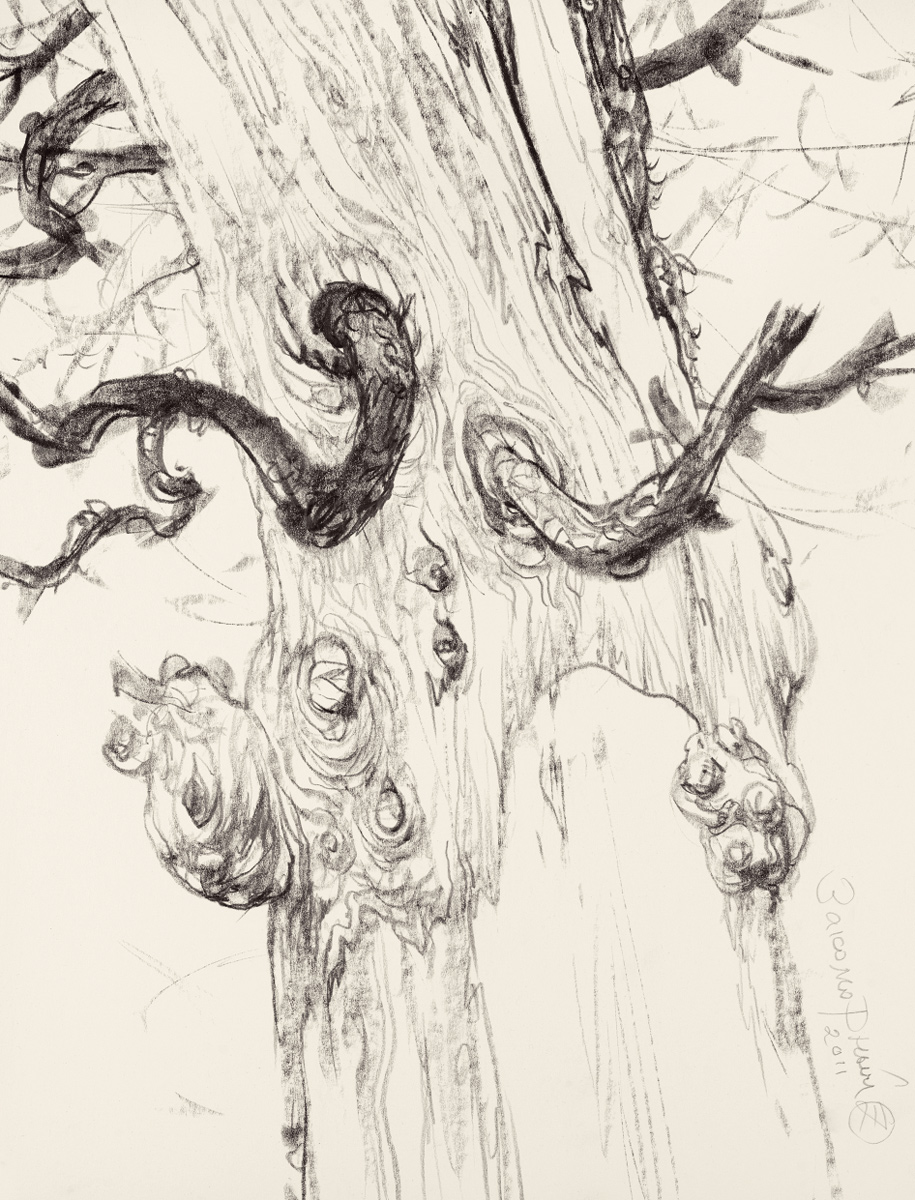 Study of a Dried Branched Tree Trunk