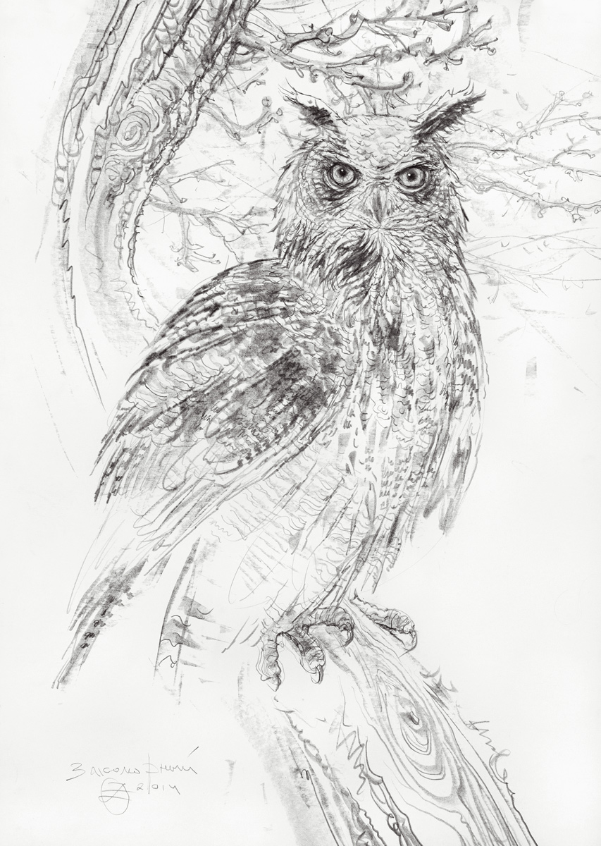 Owl on Branches