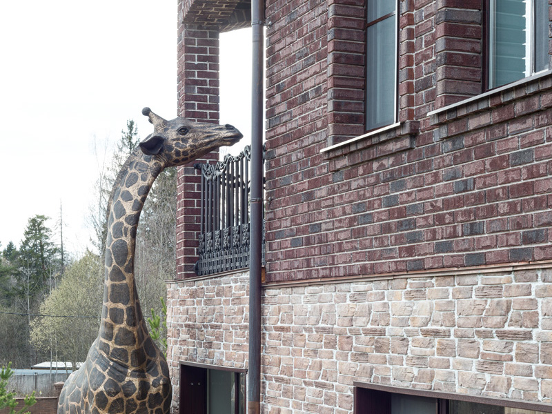 Female Giraffe. Private estate, Moscow Region